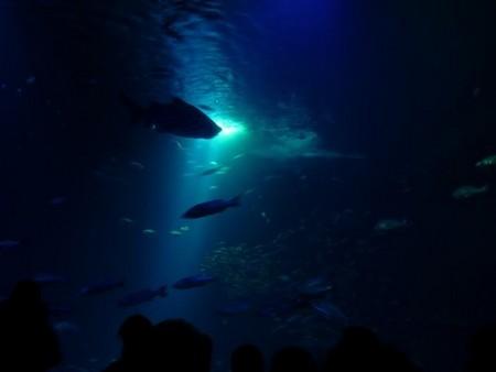 Ozeaneum: großes Becken