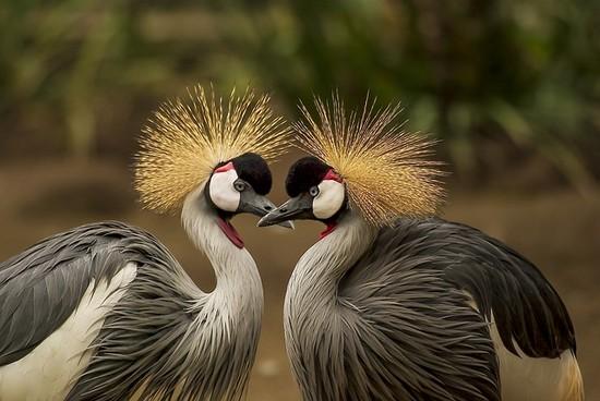 Kraniche: Vögel des Glücks